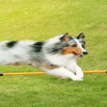 What are the benefits of dog training?