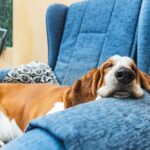 Five Reasons Why Your Dog Needs a Bed