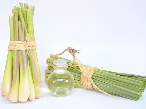 Healthy Alternatives 10A9900 Lemongrass Essential Oil